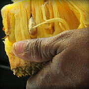 Jamaican Jack Fruit Print by Karen Wiles