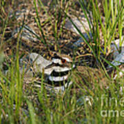 Killdeer Print by Linda Freshwaters Arndt