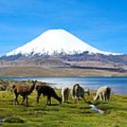 Lake Chungara Chilean Andes Print by Kurt Van Wagner
