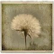 Large Dandelion Print by Linda Olsen