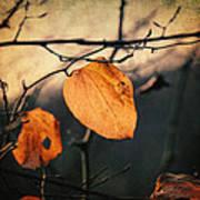Last Leaves Print by Taylan Soyturk
