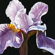 Lavender Iris On Black Print by Sharon Freeman