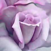 Lavender Rose Flower Portrait Print by Jennie Marie Schell