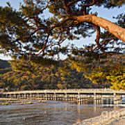 Leaning Pine Tree Arashiyama Kyoto Japan Print by Colin and Linda McKie