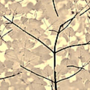 Leaves Fade To Beige Melody Print by Jennie Marie Schell
