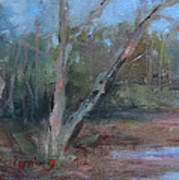 Leiper's Creek Study Print by Carol Berning