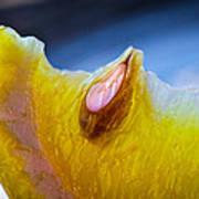 Lemon Seed Print by Bob Orsillo