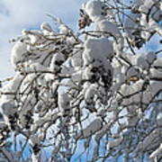 Lilac In Winter Print by Michele Myers