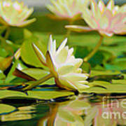 Lily Pond Print by  Fli Art