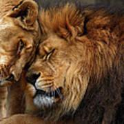 Lions In Love Print by Emmanuel Panagiotakis