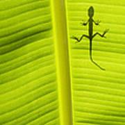 Lizard Leaf Print by Tim Gainey