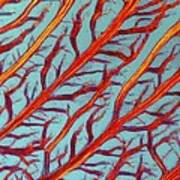 Lm Of The Red Algae, Plumaria Elegans Print by Science Photo Library