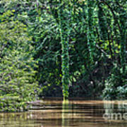 Louisiana Bayou Toro Creek Swamp Print by D Wallace