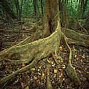 Lowland Tropical Rainforest Print by Ferrero-Labat