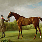 Lustre Held By A Groom Print by George Stubbs