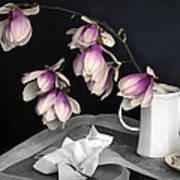 Magnolia Still Print by Diana Angstadt
