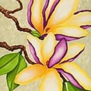 Magnolias Print by Carol Sabo