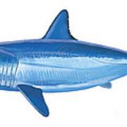 Mako Shark Print by Carey Chen