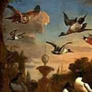 Mallard Golden Eagle Wild Fowl In Flight Print by Melchior de Hondecoeter