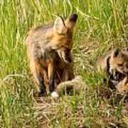 Mama Fox And Kits 2 Print by Natural Focal Point Photography