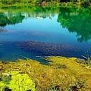 Mammoth Springs Water Vegetation Print by Cindy Croal
