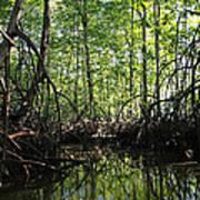 mangrove forest in Costa Rica 2 Print by Rudi Prott