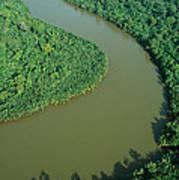 Mangrove Rhizophora Sp In Mahakam Delta Print by Cyril Ruoso