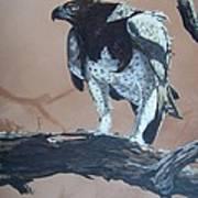 Martial Eagle Print by Robert Teeling