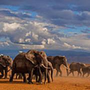 Matriarch On Amboseli Print by Pieter Ras