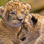 Minor Collision Print by Ashley Vincent