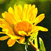 Moment In The Sun - Golden Flower - Northern California Print by Mark E Tisdale