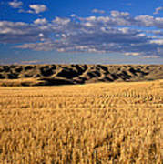 Montana   Field And Hills Print by Anonymous