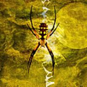 Moonlit Web Print by J Larry Walker