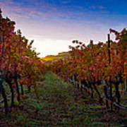 Morning At The Vineyard Print by Bill Gallagher
