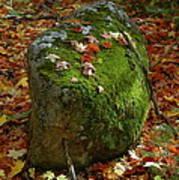 Mossy Rock Print by Sandra Updyke