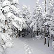 Mount Osceola Trail - White Mountains New Hampshire Print by Erin Paul Donovan