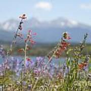 Mountain Wildflowers Print by Juli Scalzi