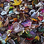 Multicolored Autumn Leaves Print by Rona Black