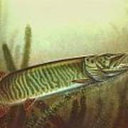 Muskie And Spinner Bait Print by Jon Q Wright