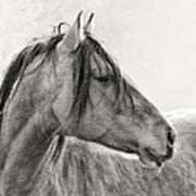 Mustang Print by Ron  McGinnis