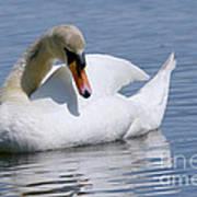 Mute Swan 1 Print by Sharon  Talson