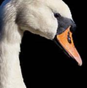 Mute Swan Print by Wobblymol Davis