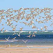 My Tern Print by Bill Wakeley