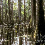 Natchez Trace Wetlands Print by Bob Phillips