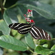 National Zoo - Butterfly - 12121 Print by DC Photographer