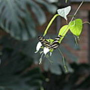 National Zoo - Butterfly - 12124 Print by DC Photographer