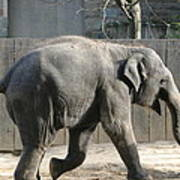 National Zoo - Elephant - 12126 Print by DC Photographer