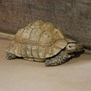 National Zoo - Turtle - 12121 Print by DC Photographer