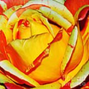 Nature's Vivid Colors Print by Kaye Menner