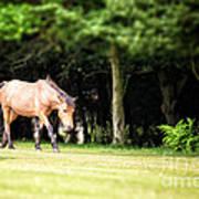 New Forest Pony Print by Jane Rix